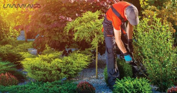 نمونه قرارداد مشارکت احداث باغ